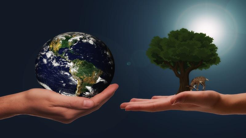 Stoviglie Biodegradabili e Compostabili