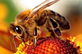 Perché le api sono importanti per il mondo?